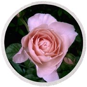 English Beauty Ambridge Rose Round Beach Towel by Louise Kumpf