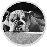 English Bulldog Round Beach Towel