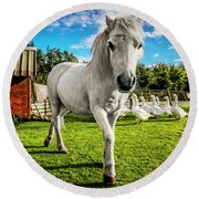 English Gypsy Horse Round Beach Towel