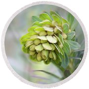 Round Beach Towel featuring the photograph Euphorbia by Linda Lees