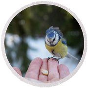 Eurasian Blue Tit Lunch Time Round Beach Towel