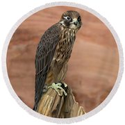 Eurasian Hobby Falcon Round Beach Towel by Walter Colvin
