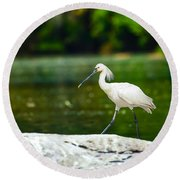 Eurasian Spoonbill Walking On The Riverside. Round Beach Towel