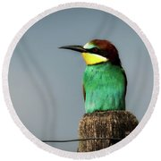 Round Beach Towel featuring the photograph European Bee Eater by Wolfgang Vogt