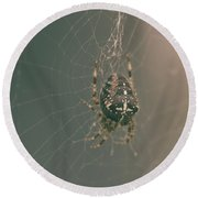 European Garden Spider B Round Beach Towel