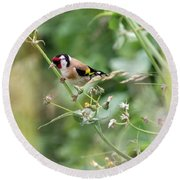 European Goldfinch Perched On Flower Stem B Round Beach Towel