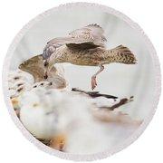 Round Beach Towel featuring the photograph European Herring Gulls In A Row, A Landing Bird Above Them by Nick Biemans