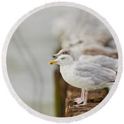 European Herring Gulls In A Row Fading In The Background Round Beach Towel