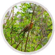 European Robin Round Beach Towel