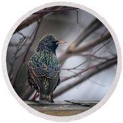 European Starling In Non Breeding Colors Round Beach Towel