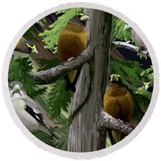Evening Grosbeaks Round Beach Towel
