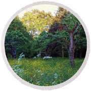 Round Beach Towel featuring the photograph Evening Light by Anne Kotan