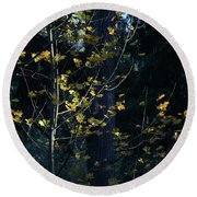 Round Beach Towel featuring the photograph Evening Light In November by Ronda Broatch