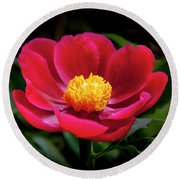 Round Beach Towel featuring the photograph Evening Peony by Charles Harden