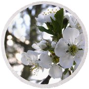 Round Beach Towel featuring the photograph Evening Show - Cherry Blossoms by Angie Rea