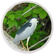 Evening Snack For A Night Heron Round Beach Towel by Donald C Morgan