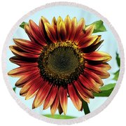 Round Beach Towel featuring the photograph Evening Sun Sunflower 2016 #1 by Jeff Severson