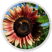 Round Beach Towel featuring the photograph Evening Sun Sunflower 2016 #2 by Jeff Severson