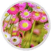 Round Beach Towel featuring the photograph Everlasting Daisies, Kings Park by Dave Catley