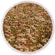 Everlastings King's Park Round Beach Towel by Cassandra Buckley