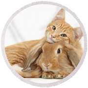 Everybody Needs A Bunny For A Pillow Round Beach Towel