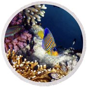 Exciting Red Sea World Round Beach Towel