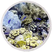 Round Beach Towel featuring the photograph Explosion Of Life I by Perla Copernik