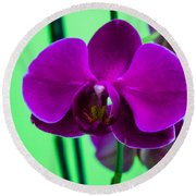 Exposed Orchid Round Beach Towel