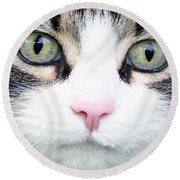 Round Beach Towel featuring the painting Expressive Maine Coon D122016 by Mas Art Studio
