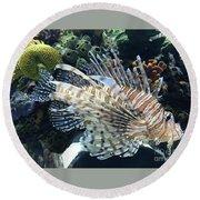 Exquisite Fish Round Beach Towel