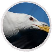 Round Beach Towel featuring the photograph Eye Of A Seagull by Sumoflam Photography