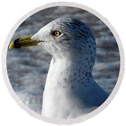 Eye Of The Gull Round Beach Towel