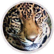 Eye Of The Leopard Round Beach Towel