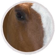 Eye On You Horse Round Beach Towel