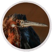 Eye To Eye With Heron Round Beach Towel
