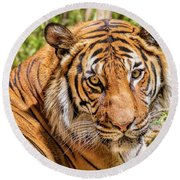 Eyes Of A Tiger Round Beach Towel