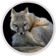 Eyes Of The Fox Round Beach Towel