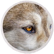 Round Beach Towel featuring the photograph Eyes Of The Gray Wolf by Teri Virbickis