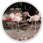 Fabulous Flamingos Round Beach Towel