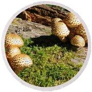 Fabulus Fungi Round Beach Towel