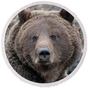 Face Of The Grizzly Round Beach Towel