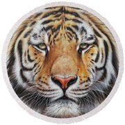 Faces Of The Wild - Amur Tiger Round Beach Towel