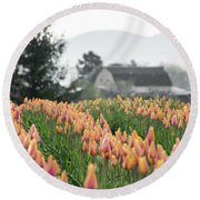 Faded Tulip Barn Round Beach Towel