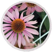 Fading To Pink Cone Plant Round Beach Towel