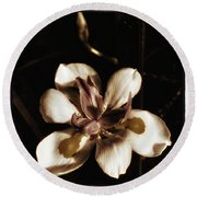 Round Beach Towel featuring the photograph Fairy Iris. A Butterfly Landed On My by Mr Photojimsf