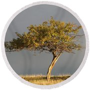 Fall At The Crabapple Tree Round Beach Towel