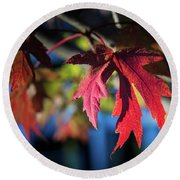 Fall Color 5528 19 Round Beach Towel