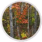 Fall Color At Gladwin 4543 Round Beach Towel