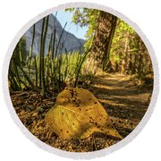 Fall In Leaf Round Beach Towel by Peter Tellone