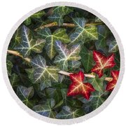 Round Beach Towel featuring the photograph Fall Ivy Leaves by Adam Romanowicz